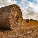 Agricoltura, foto Parlamento europeo