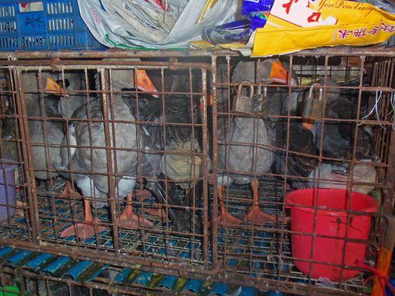Gabbia animali in un wet market foto Daniel Case