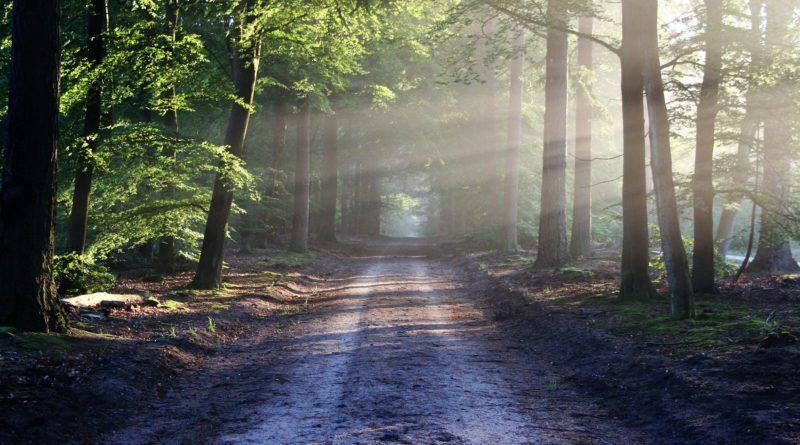 Foresta, Foto di bertvthul da Pixabay