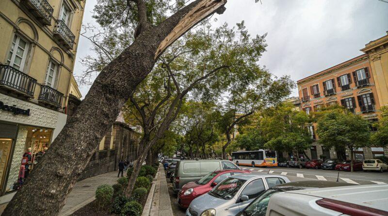 Alberi, Largo Carlo Felice