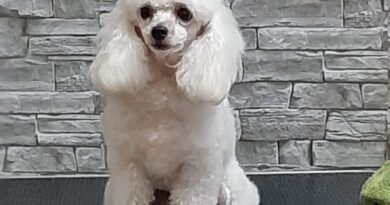 Glicy, cane allerta diabete