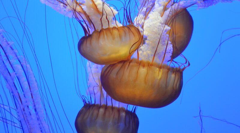 Medusa, Foto di Pexels da Pixabay