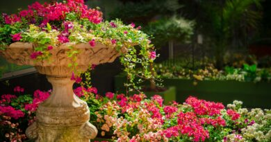 Giardino, Foto di Dar1930 da Pixabay