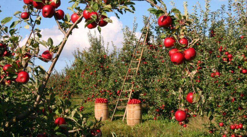 Agricoltura, Foto di lumix2004 da Pixabay